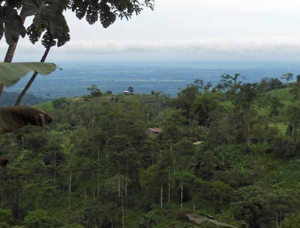 Resultado de imagen para bosque humedo