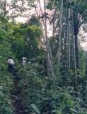 Bosque Protector Cerro Pata de Pájaro