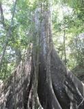 Bosque Protector Cerro Blanco