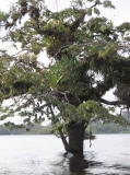 Flora Cuyabeno