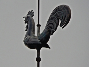 Gallito de la Catedral