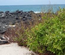 Playa Lobería