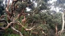Bosque Polilepys